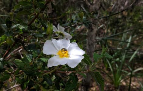 Cisto, presso il bosco Settefratelli (foto Alessio Saba)