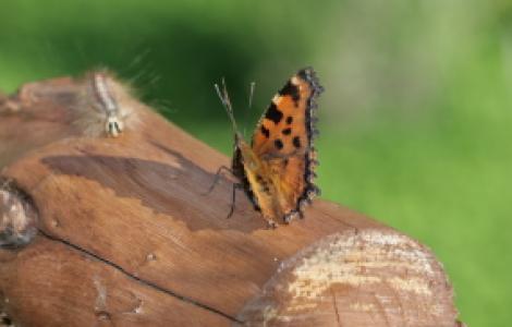Foto di Carlo Di Bella - prima classificata al concorso fotografico Limbara-giardino delle Farfalle