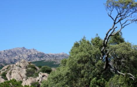 Panorama lungo il sentiero Sèmida, Limbara Sud