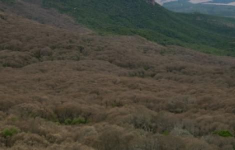 differenze nella vegetazione investita dal defogliatore