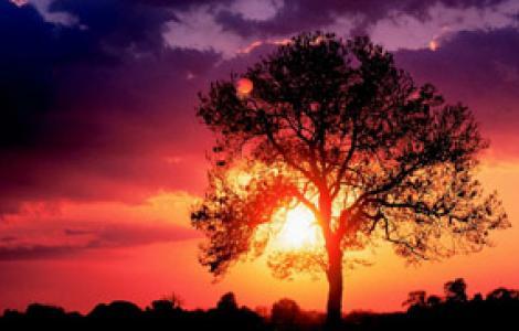 frassino al tramonto