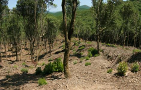 Recenti interventi di taglio produttivo a Marganai: il bosco ricresce rigoglioso!