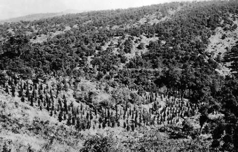 Foresta demaniale Fiorentini