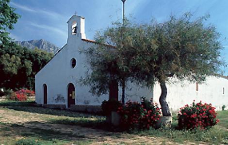 Olivastri di Santa Maria Navarrese, Baunei