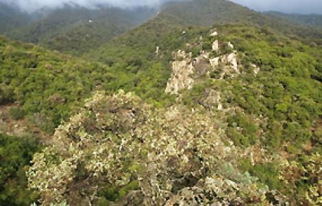 Bosco di Castiadas