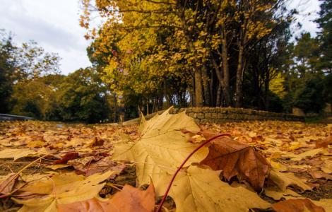 foliage accanto a una strada, presso Gairo Taquisara (C.Mascia)
