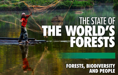 FAO world Forest
