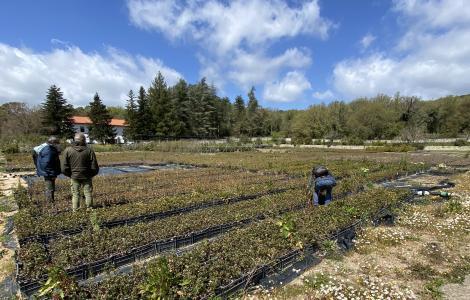 monitoraggio fitosanitario a Sorgono