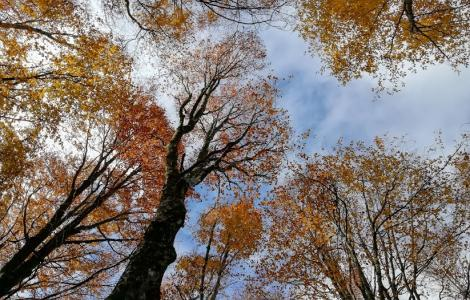 alberi da Life AforClimate
