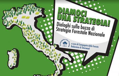 Dialoghi sulla bozza di strategia Forestale NAzionale