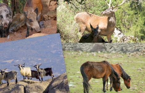Collage fauna selvatica.