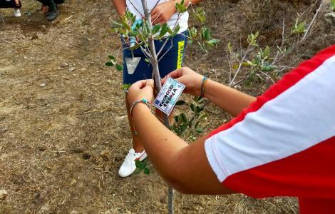 messa a dimora di alberi a Santadi, 09.2021