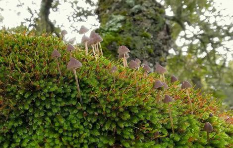 Muschio e funghi, sottobosco di Monte Burghesu(SS) - foto di Gianfranco Cossu