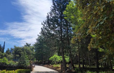 Monte Lerno, Pattada, ingresso foresta (foto F.Mura)