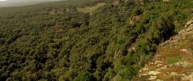 Montresta, bosco di Silva Manna