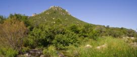 Foresta Demaniale Tepilora, Bitti