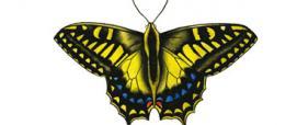 Macaone sardo-corso o Ospitone (Papilio hospiton)