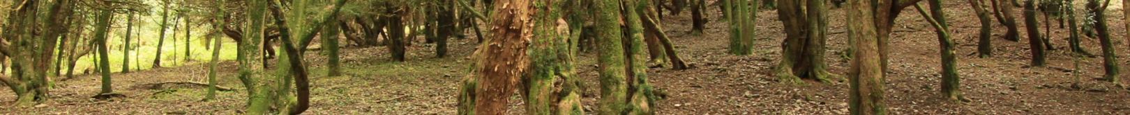 Foresta Burgos