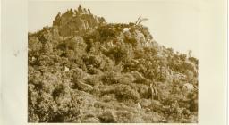 Foto storiche - Pattada, foresta di Monte Lerno: rimboschimento mediante semina di leccio 1939