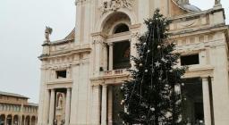 L'albero posizionato infine davanti alla chiesa di Assisi