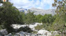 Il Corrasi visto dalla valle di Lanaitto
