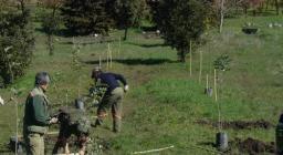 Un milione di nuovi alberi - isili 20 febbraio
