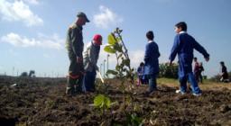 un milione di nuovi alberi - istantanea da Senorbì - messa a dimora di piantine