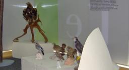 la sezione dedicata agli uccelli - foto PP.Mocci