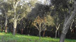 Bortigiadas immagine della zona