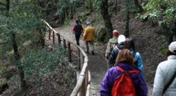Nordik Walking: anche a Montarbu questo sport è stato praticato in foresta