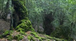 Orgosolo, bosco di Sas Baddes - foto R. Brotzu
