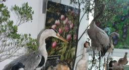 mostra naturalistica all'arboreto mediterraneo