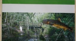 pannello informativo della presenza della trota nel rio Ermolinos