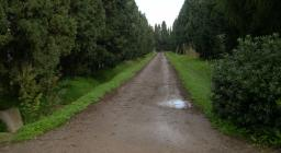 Una strada interna del vivaio di Bagantinus