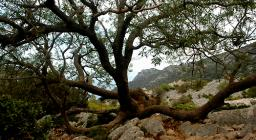 Discesa verso cala Goloritzè. Forme della natura