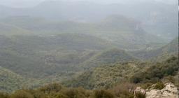 Vista della foresta di Montarbu da Punta Margiani Pubusa (da Digital Library)