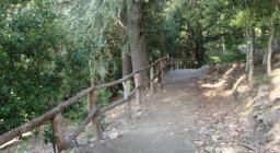 Montarbu, sentiero di San Sebastiano (da Digital Library)