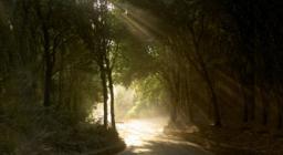 Bosco nella Foresta Marganai