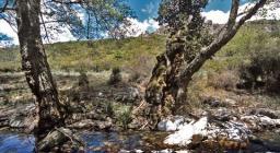 Leccio, Foresta di Montes, Orgosolo