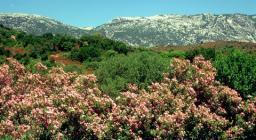Oleandri nel fondovalle del Monte Albo