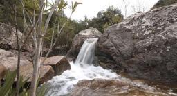 Oleandri presso il Rio Maidopis