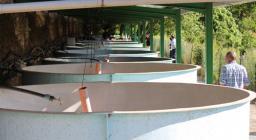 Vasche per l'allevamento delle le trote sarde - Allevamento Ittico di Sadali
