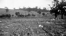 Foresta Anela, foto d'archivio