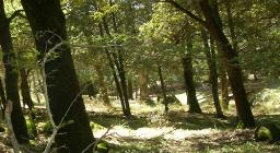 Foresta demaniale Fiorentini
