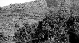 Monte Lerno foto storica