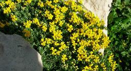 La flora di Porto Conte