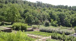 Foresta demaniale Monte Pisanu