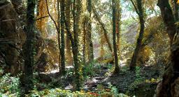 Foresta demaniale Marganai