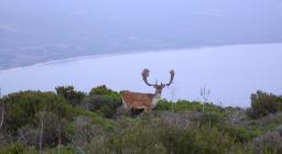Censimento Daino - Foresta demaniale Porto Conte