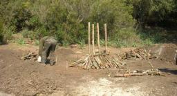 4 pali portanti per costruire la carbonaia